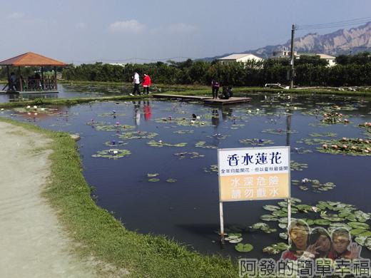 中社觀光花市42-蓮花池