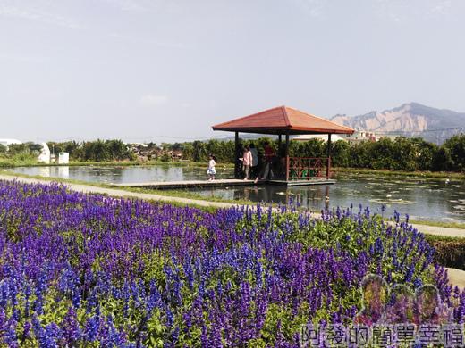 中社觀光花市45-紫色花海_蓮花池_涼亭與火燄山