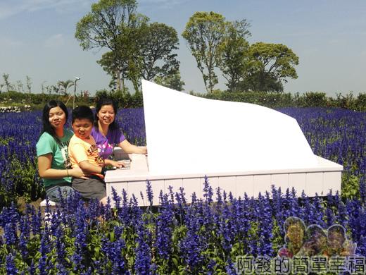 中社觀光花市46-紫色花海間的白鋼琴留影