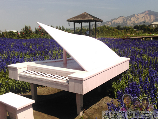 中社觀光花市47-紫色花海間的白鋼琴