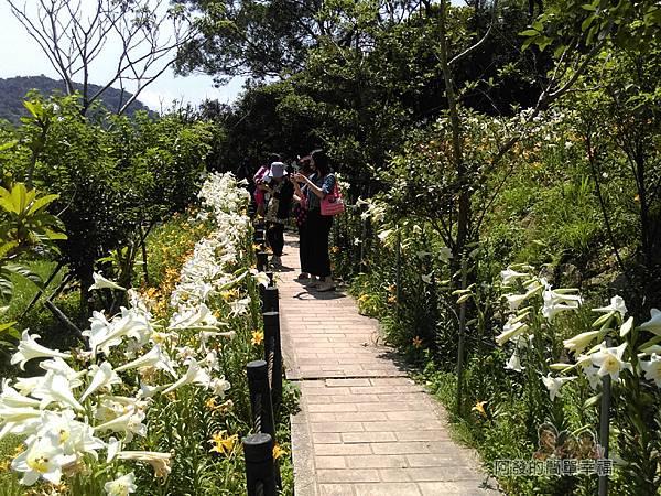白石湖23-花徑中遊客爭相留影