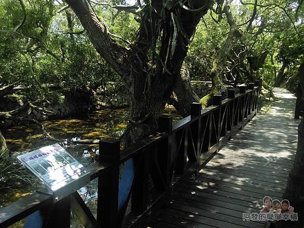 白石湖35-生態池旁林蔭步道