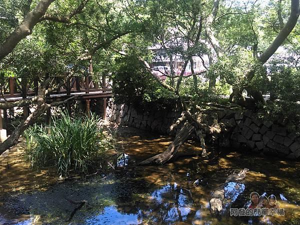 白石湖36-生態池