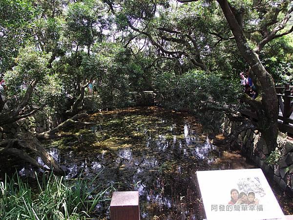 白石湖37-生態池舊貌