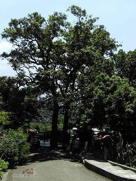 白石湖46-遠處的夫妻樹