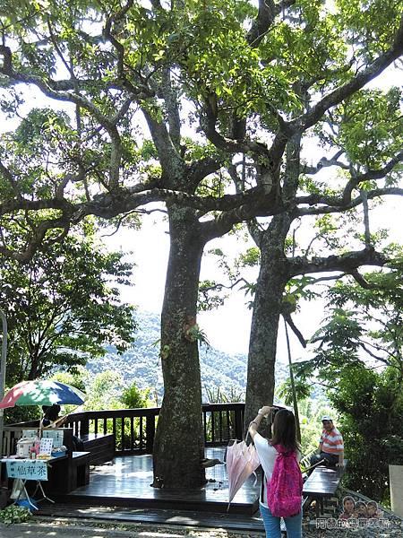 白石湖47-夫妻樹