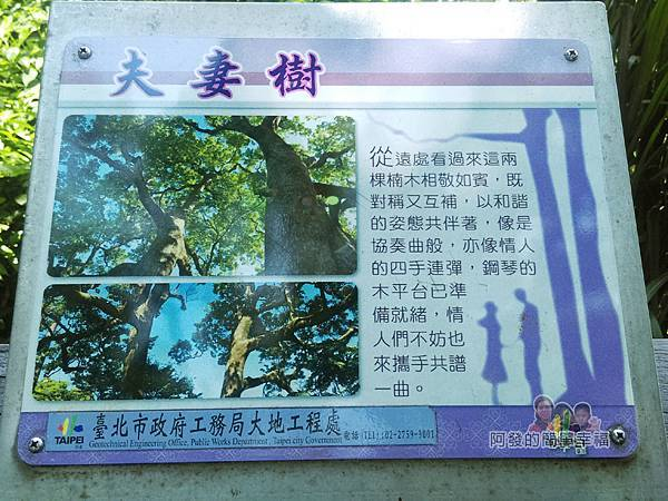 白石湖48-夫妻樹說明