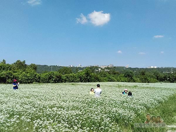中新里韭菜生長專業區14-佇足拍照的人們