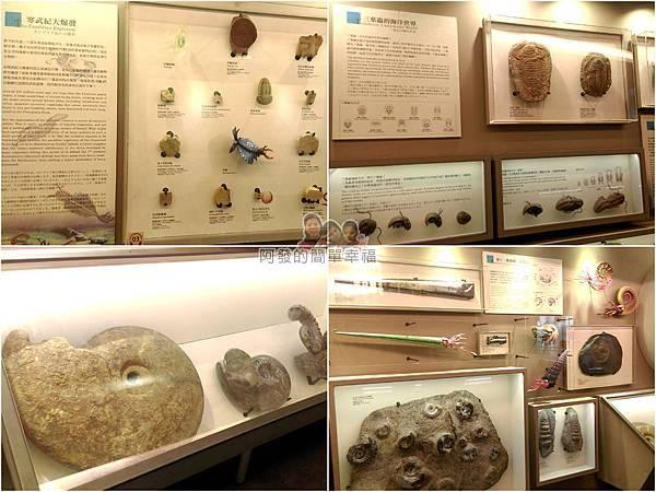 台灣博物館土銀館13-生命的起源組圖