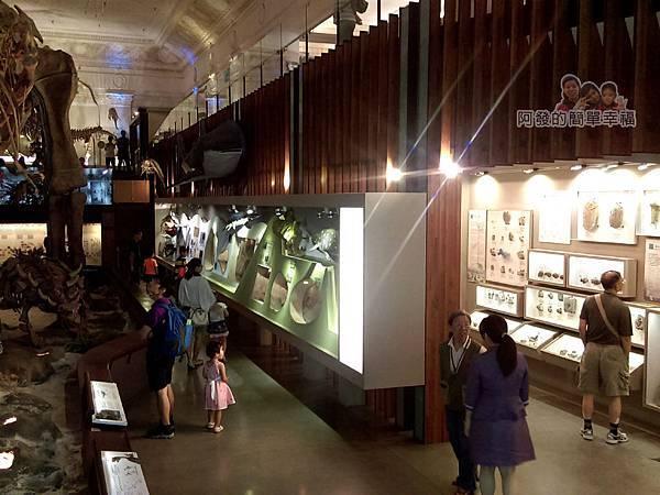 台灣博物館土銀館14-海棲哺乳動物區