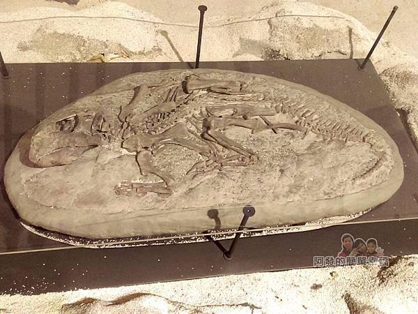 台灣博物館土銀館19-仿恐龍化石