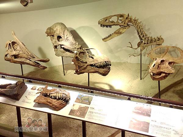 台灣博物館土銀館21-仿恐龍頭骨化石區