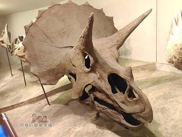 台灣博物館土銀館22-仿恐龍頭骨化石