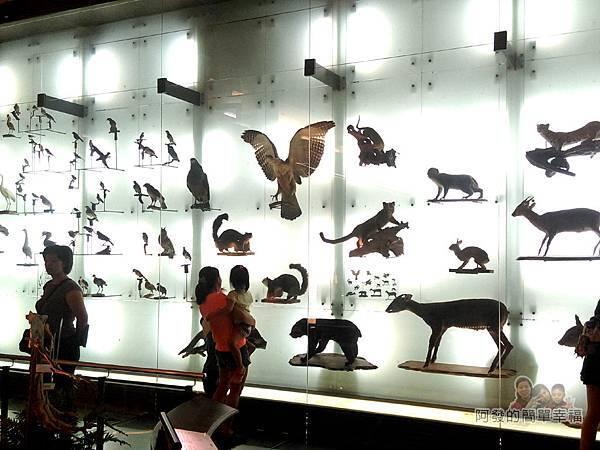台灣博物館土銀館23-台灣生物光牆展區