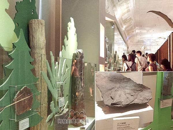 台灣博物館土銀館24-大森林的世界