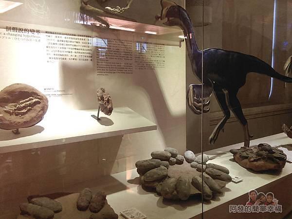 台灣博物館土銀館25-恐龍下蛋的方式