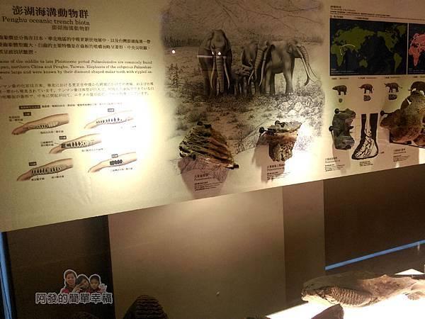 台灣博物館土銀館29-台灣本土化石區-澎湖