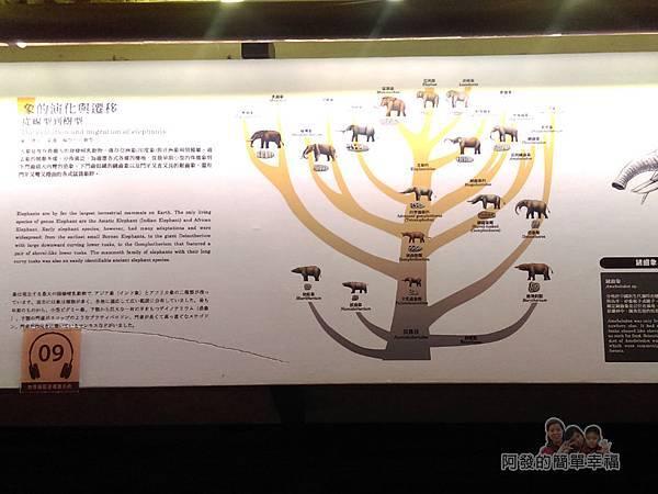 台灣博物館土銀館30-象的演化與遷移