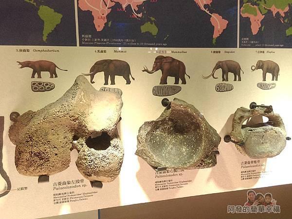 台灣博物館土銀館31-象的演化與遷移II