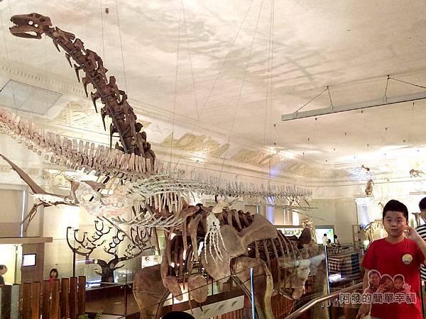 台灣博物館土銀館35-生命演化與文化智慧的知性之旅