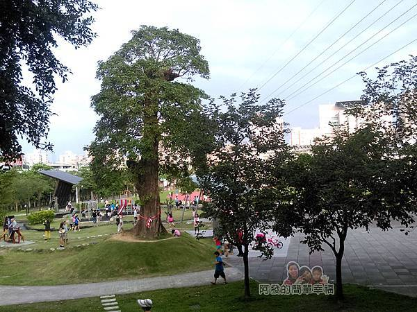 錦和運動公園22-三百年茄苳老樹