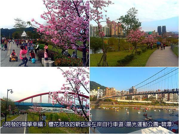 新北市02-櫻花怒放的新店溪左岸自行車道(陽光運動公園-碧潭段)