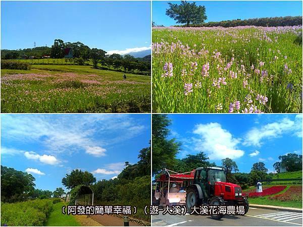 大溪-遊-03-大溪花海農場