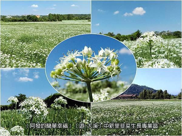 大溪-遊-04-中新里韭菜生長專業區
