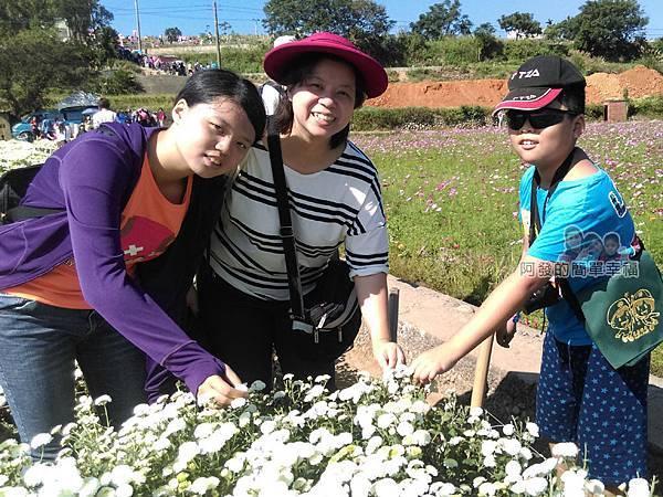 苗栗銅鑼杭菊季32-一場採杭菊與特色杭菊小吃的新體驗