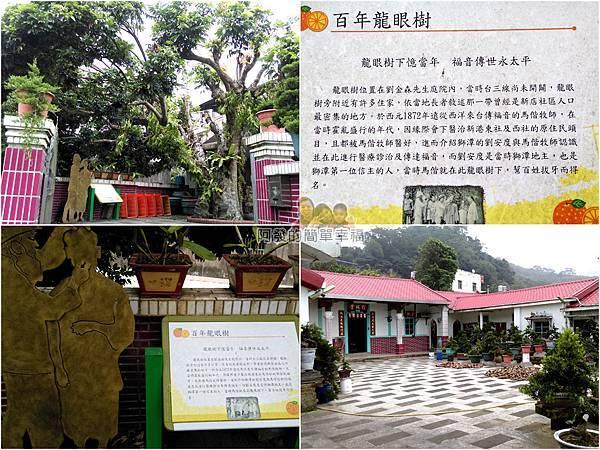 苗栗獅潭彩繪44-百年龍眼樹