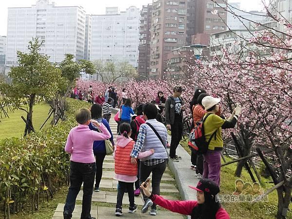 東湖樂活公園12-很有Fu的粉紅櫻花步道爭相留影