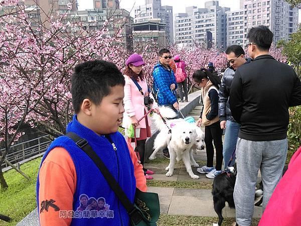 東湖樂活公園17-不少出來溜狗的人們