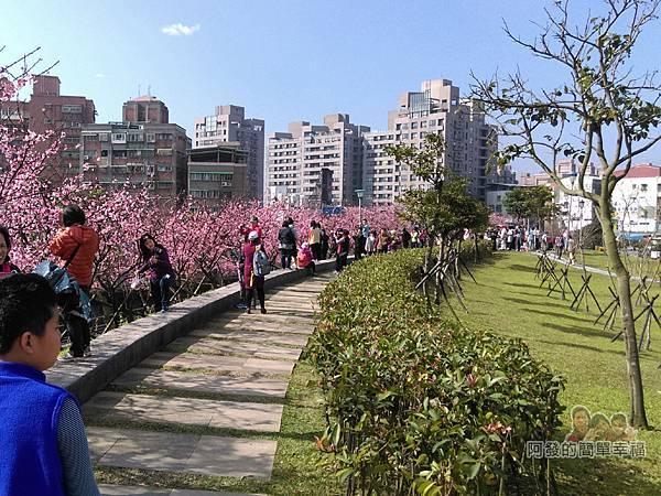 東湖樂活公園18-櫻花步道尾端一景