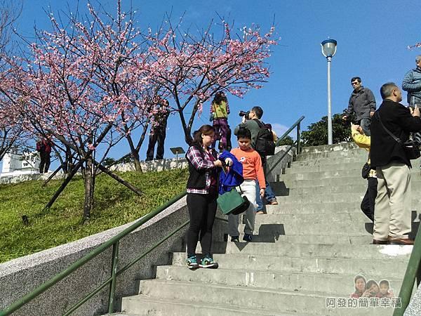 東湖樂活公園19-櫻花步道土坡的階梯