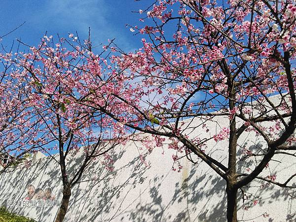 東湖樂活公園28-華城橋旁櫻景II
