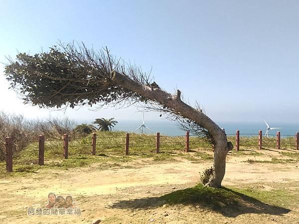苗栗縣後龍-好望角09-斜著長的樹II