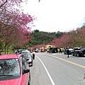 清水地熱01-長埤湖前有片櫻花林