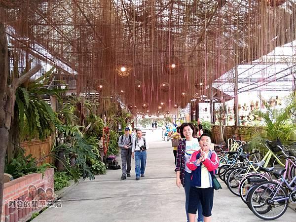 台北花卉村12-珠簾走廊-錦屏藤垂掛的氣生根妝點上藤編燈球