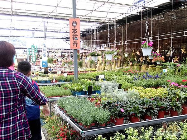 台北花卉村26-花庭園藝-包羅萬象的大花園