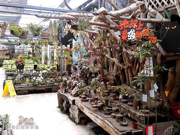 台北花卉村28-花庭園藝-園內一景
