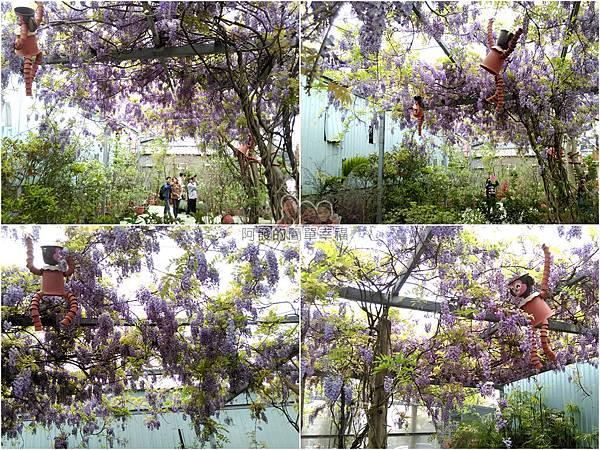 台北花卉村33-新娘禮車停車區-紫藤花組圖