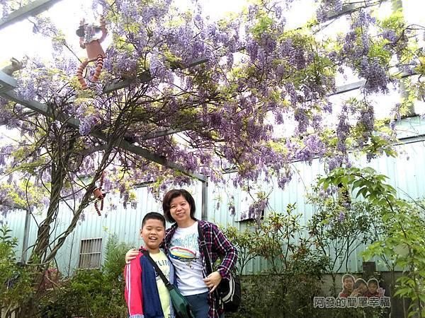 台北花卉村35-新娘禮車停車區-紫藤花下留影