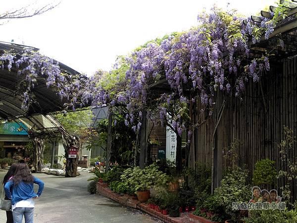 台北花卉村37-萬象廣場-屋簷下的紫藤花