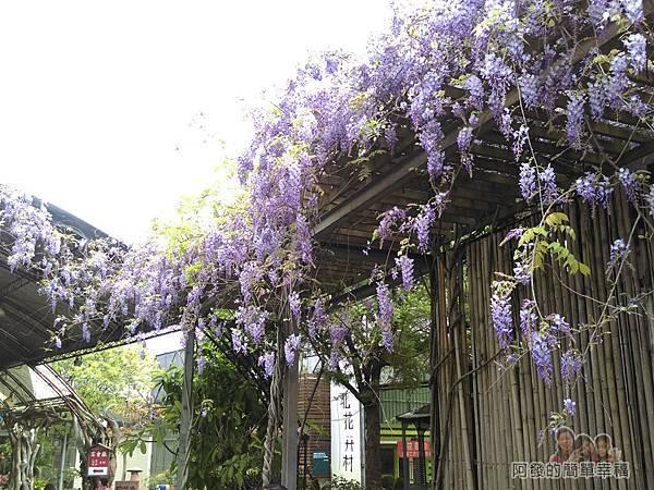 台北花卉村38-萬象廣場-屋簷下的紫藤花特寫