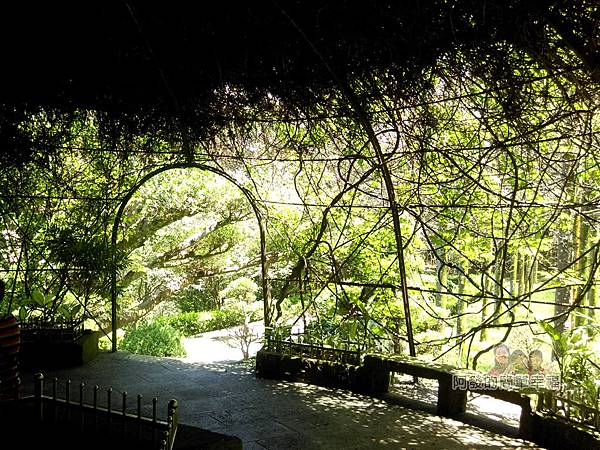 三峽白雞行脩宮24-藤葉形成的涼亭內