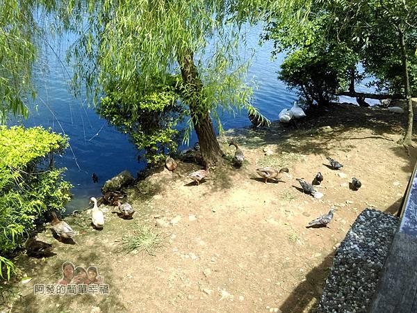 龍潭大池29-滿月橋下的鳥禽