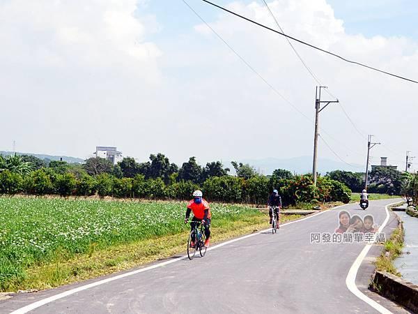 中新里韭菜花海12-騎自行車的人們