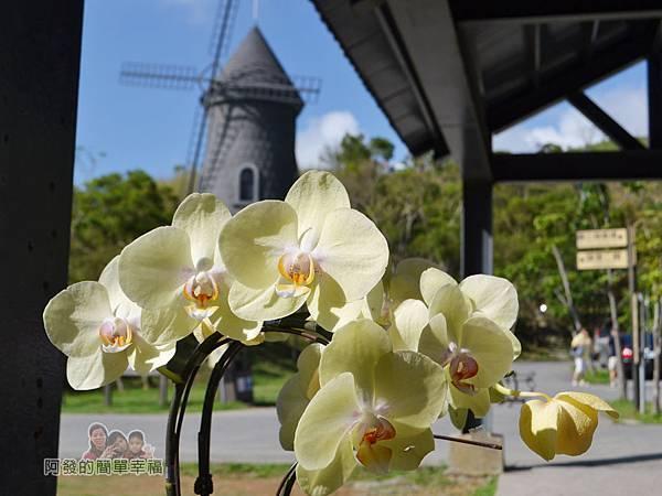 金車伯朗城堡咖啡館12-城堡1館門口前的蘭花