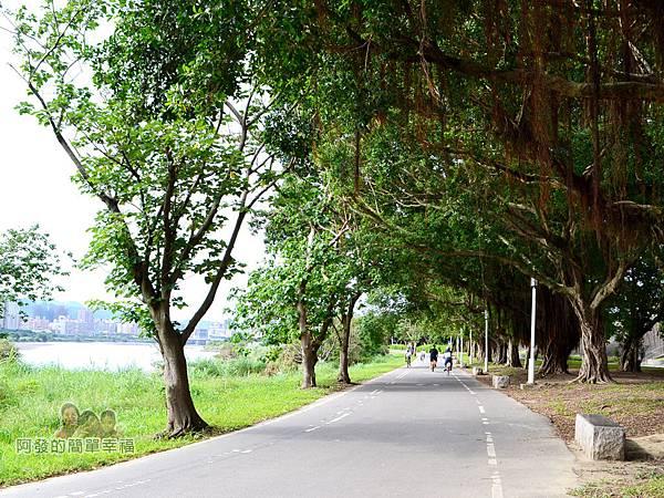 新店溪右岸15-中正河濱公園路段-一小段路有如綠色隧道