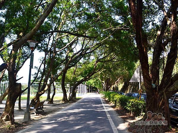 新店溪右岸28-光復橋至華翠橋路段-榕樹林蔭下的自行車道